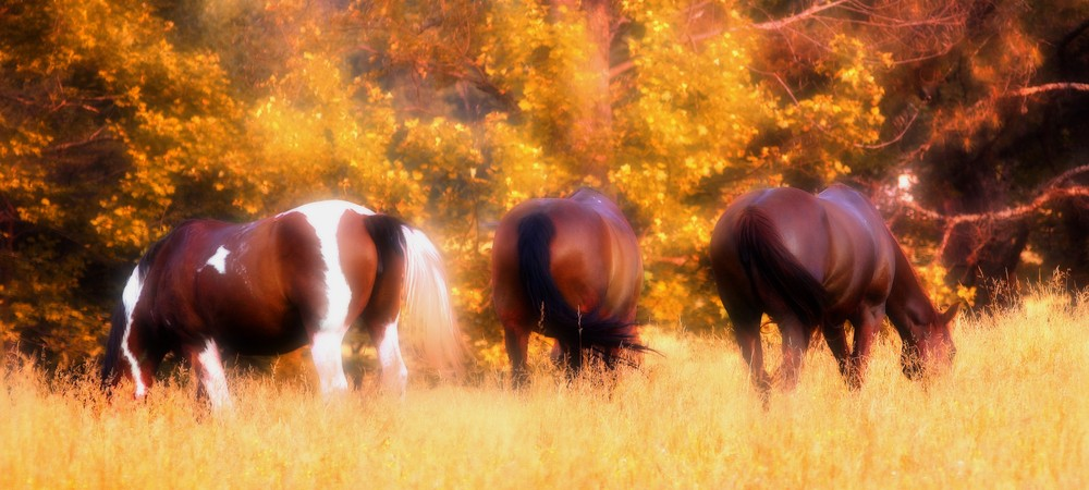 herbs for horses, herbs for dogs, holistic vets, herbal vets
