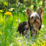 herbs for dogs, herbs for horses, holistic vets